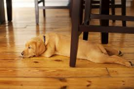 best flooring for pets. Floor: Excellent Dogs And Hardwood Floors Modest Decoration On Inspirational Image Of From Best Flooring For Pets I