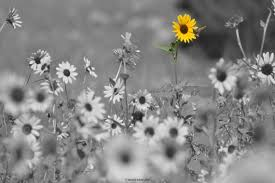 black and white photography with color flowers. Wonderful And Image 0 On Black And White Photography With Color Flowers A