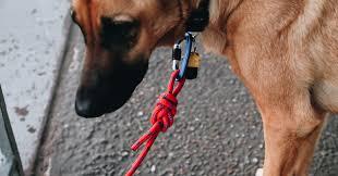 diy climbing rope dog leash