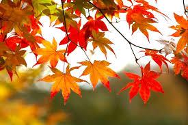 Resultado de imagen para hojas de otoño