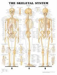 Anatomical Chart Company 9781587790621 Mckesson Medical