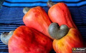 Marañon Jocote Cashew Apple Guatemalan Fruits Okantigua Com