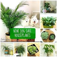 decoration non toxic house plants safe for pets home mansion houseplants not to dogs indoor
