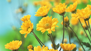 Yellow Flower Desktop Wallpapers - Top ...