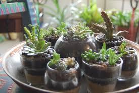 Tiny succulent container garden