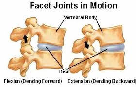 Facets Def Facet Joints Of The Spines Anatomy