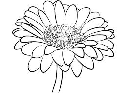 Bộ sưu tập tranh tô màu hoa đồng tiền đẹp nhất cho bé - Tranh Tô Màu cho bé
