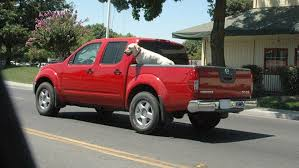 Don't Put Dogs in the Back of Pick-Up Trucks! | Whole Dog Journal