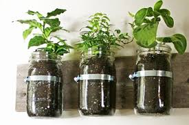 indoor gardening kits. Indoor Gardening Kits Vegetables 3 This T