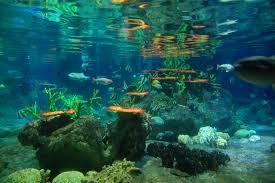 Aquarium In Hk Ocean Park Live Photos Of The Ocean
