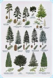 Tree Identification Chart Tree Identification Guide Tree Types Id Trees By Leaf