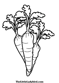 carrot coloring page 08 carrot coloring page free download on coloring page of a carrot