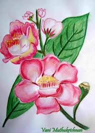 pencil sketch pencil shading flowers flower drawings and realistic shading rose drawing pencil art jpg 1899x2673 shading art rose drawings colored pencil