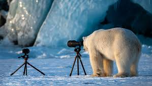 What Do You Do If a Polar Bear Asks to Borrow Your Camera? Shoot an  Award-Winning Image | Fstoppers