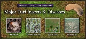 Turf Disease Major Turf Insects Diseases University Of Illinois Extension