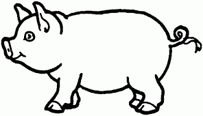 coloring page fabulous pig cartoon drawing drawings of pigs