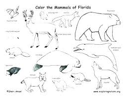 Tundra Coloring Pages Houseofhelpccorg