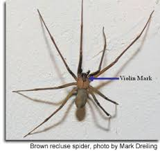Common Spiders Of Maryland Marylands Wild Acres