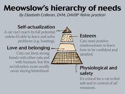 Maslow Hierarchy Of Needs Meowslows Hierarchy Of Needs