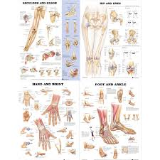 Laminated Joint Chart Bundle Shoulder Elbow Hip Knee Hand Wrist And Foot Ankle