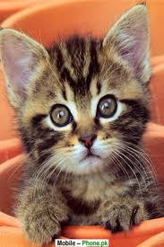 cute kittens wallpapers for mobile. Exellent For Cute_cats_and_kittens_animals_mobile_wallpaperjpg Intended Cute Kittens Wallpapers For Mobile
