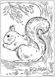 Realistic Squirrel Coloring Pages For Adults Animal Coloring Pages