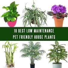 indoor plants for cats best low maintenance pet friendly house plants flowering house plants safe cats