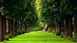 Beautiful Nature Wallpapers For ...