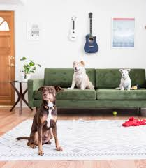 animal friendly furniture. Tips For Pet Friendly Furniture Animal Friendly Furniture A