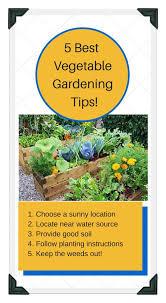 raised bed vegetable garden layout ideas