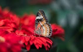 desktop wallpaper butterfly. Fine Desktop Preview Wallpaper Butterfly Wings Bright Flower Blur On Desktop Wallpaper Butterfly