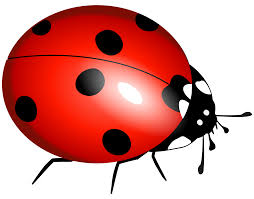 bug clipart png. download free bug clipart clipartmonk clip art images png c