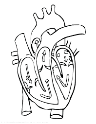 Love Heart Coloring Pages Mtkguideme
