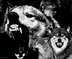 Image result for Grievous wolves