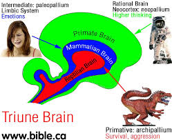 Image result for reptilian brain