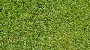 green grass football field. Grass Plant Field Lawn Meadow Texture Leaf Green Soil Football Background Grassland Shrub Flooring Artificial Turf