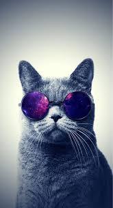 space cat iphone wallpaper. Exellent Space Psychedelic Cat Inside Space Cat Iphone Wallpaper P