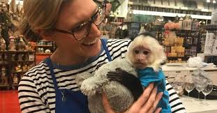 Image Unicef Pier Imports Photo Of Xander The Monkey Stops By To Say Hello To Pier Glassdoor Pier Imports Jobs Glassdoor