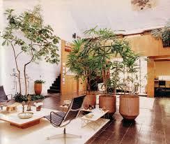 Palm Tree Decor For Living Room Tree For Living Room Living Room Design Ideas