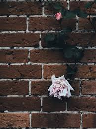 rose flowers decoration on old brick