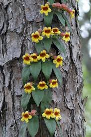 21 Best Our Fruit Trees Images On Pinterest  Fruit Trees Outdoor Fruit Tree Nursery North Carolina