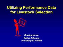 Utilizing Performance Data for Livestock Selection Developed by: Celina  Johnson University of Florida. - ppt download