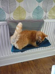 diy cat bed cover