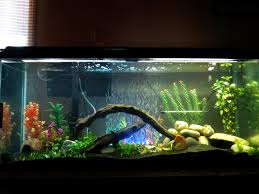55 Gallon Fish Tank Aquarium #trustefish | Fish | Pinterest | Tanked  aquariums, Fish tanks and 55 gallon
