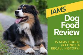 Dog Food Rating Chart 2013 Iams Dog Food Review Is Iams Good Ratings Recall History