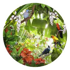 round bird artwork nz tui indian ringneck king parrot sun conure  on wall art prints nz with birds of paradise round tropical bird collage canvas wall art