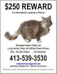 Lost Cat Flyer Lost Cat Flyer Lost Pet Research And Recovery