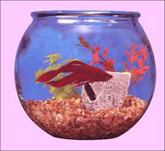 Decorative Betta Fish Bowls Aquarium Caves and Ornaments for Sale at AquariumFishnet 48