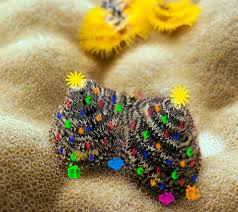 Just A Christmas Tree Worm Showing Offredang By Michelleu0027s Blue Christmas Tree Worm Facts