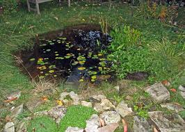Small Picture New Pond and Bog Water features Homes for Wildlife The RSPB